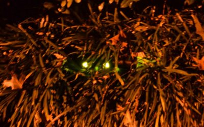 Halloween Decorations – Creepy Glowing Eyes in the Bushes