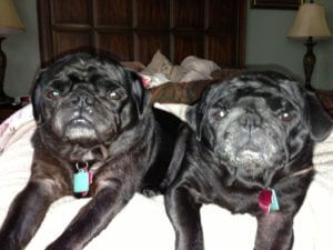 princess cupcake's puggies