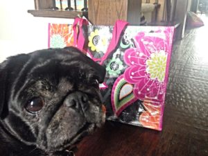 beni pug and the vera bradley tote