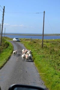 traffic jam on islay