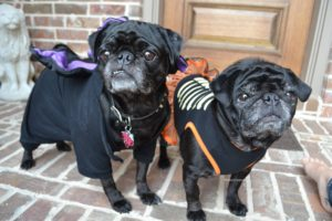 Halloween Costumes for Your Furbabes!