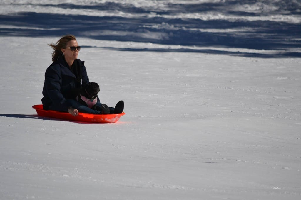 carter park sledding with pugs
