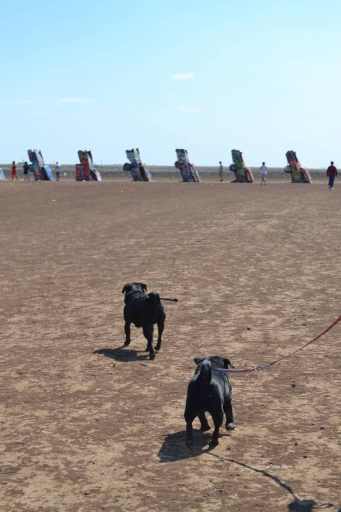 cadillac ranch is pet friendly
