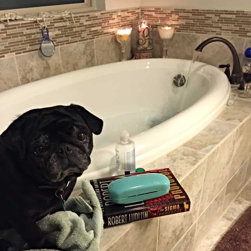 bath time with pug
