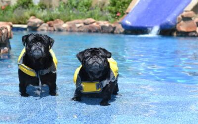 5 Essential Tips for Pet Pool Safety