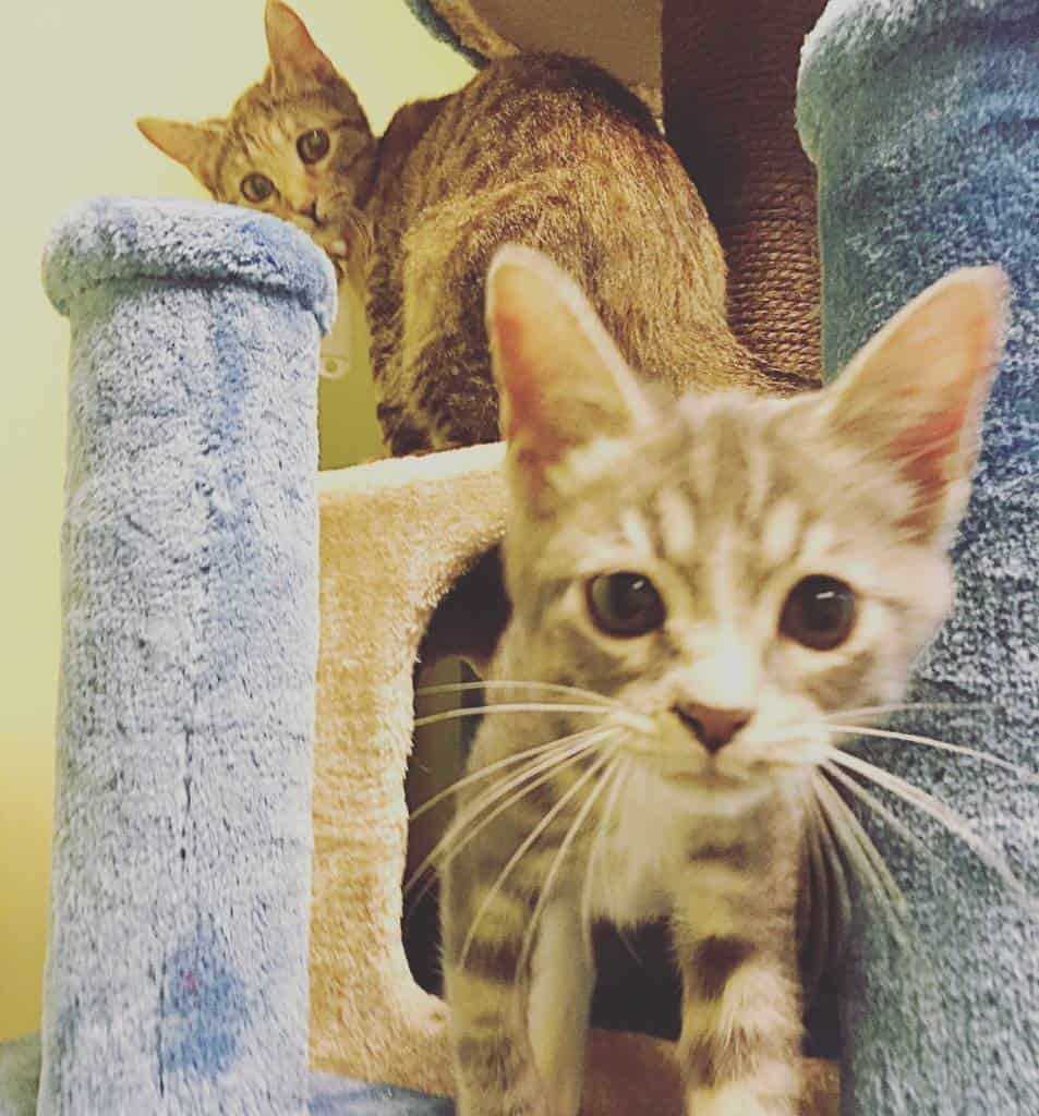 kittens at the Charming Cat Corner