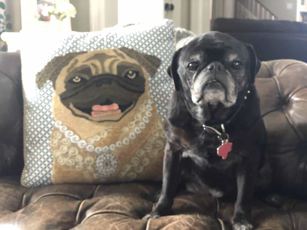 love your pet day - pug