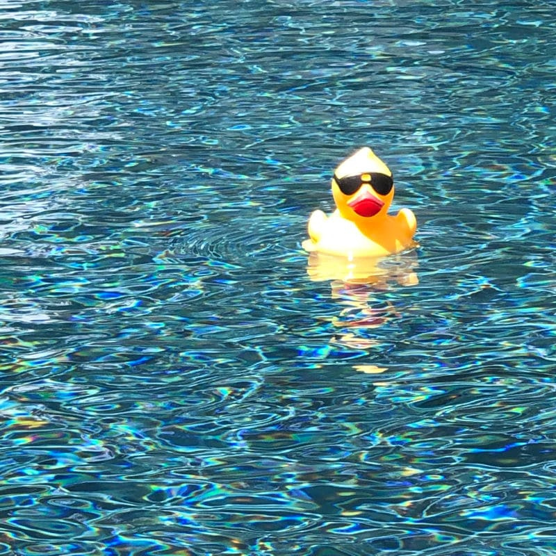 rubber duck in a swimming pool - fauxcation