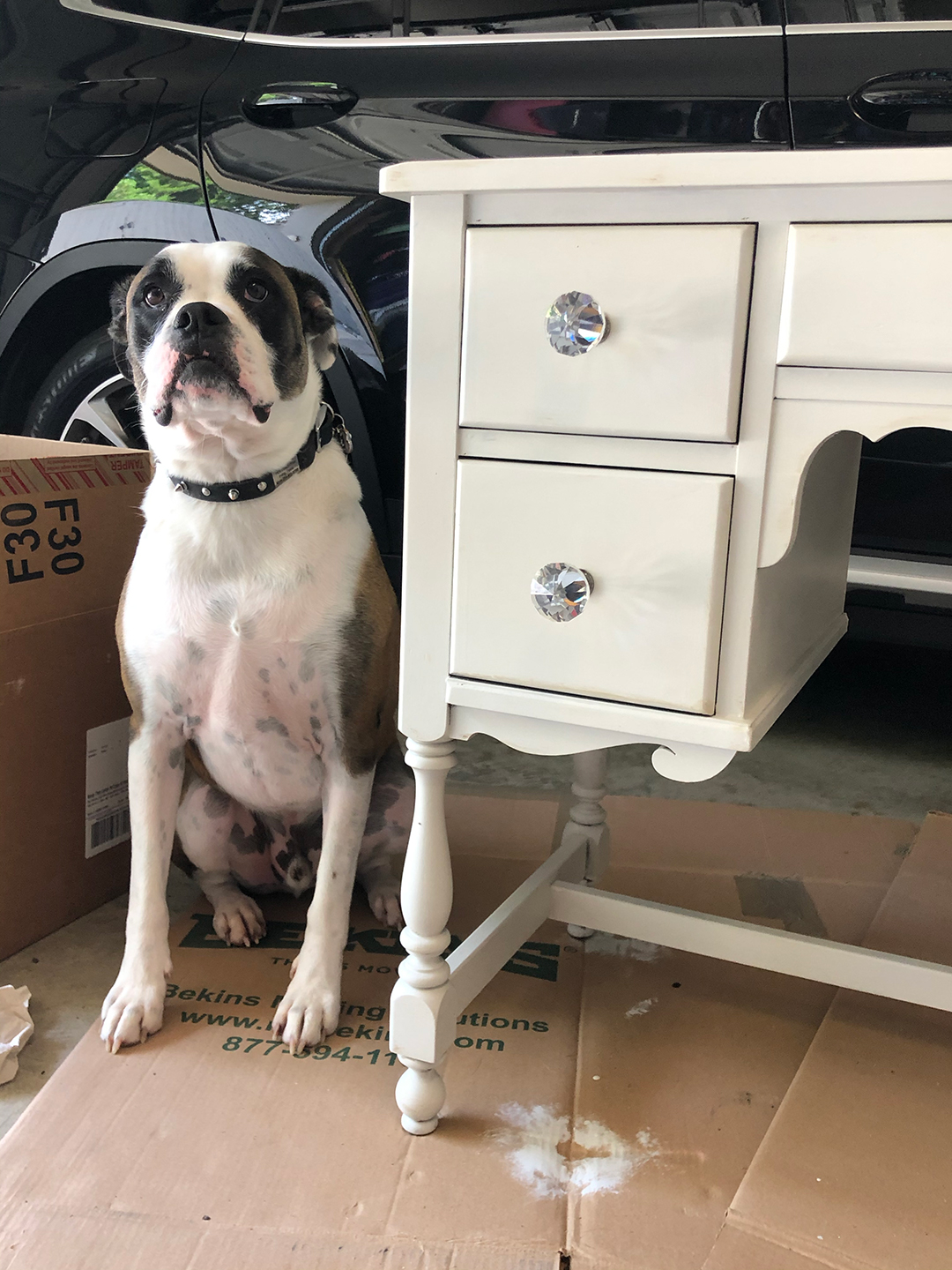chalkpaint desk with dog